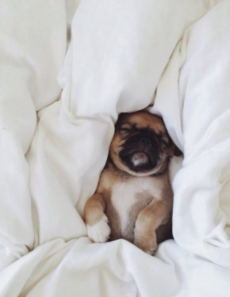 Cute puppy tucked into bed.